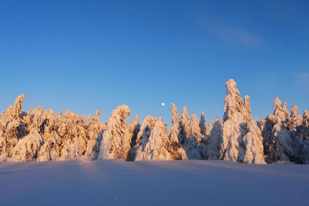 Impressionen Winter zeitiger Mondaufgang