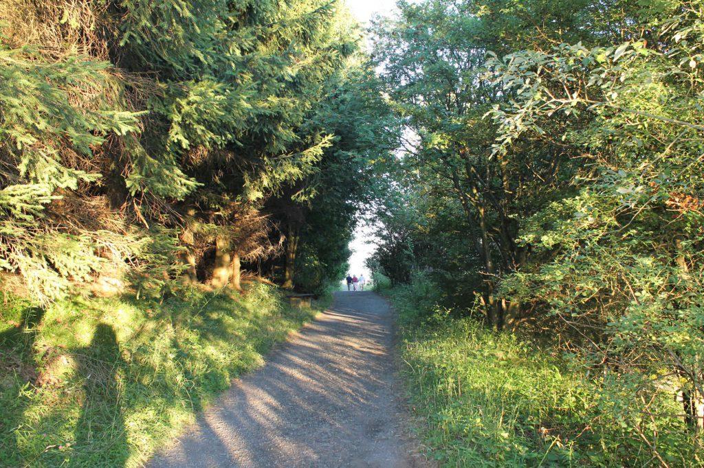 Impressionen Sommer Rundweg am Pöhlberg